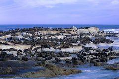 Seehund Riff / Hout Bay / Duker Island