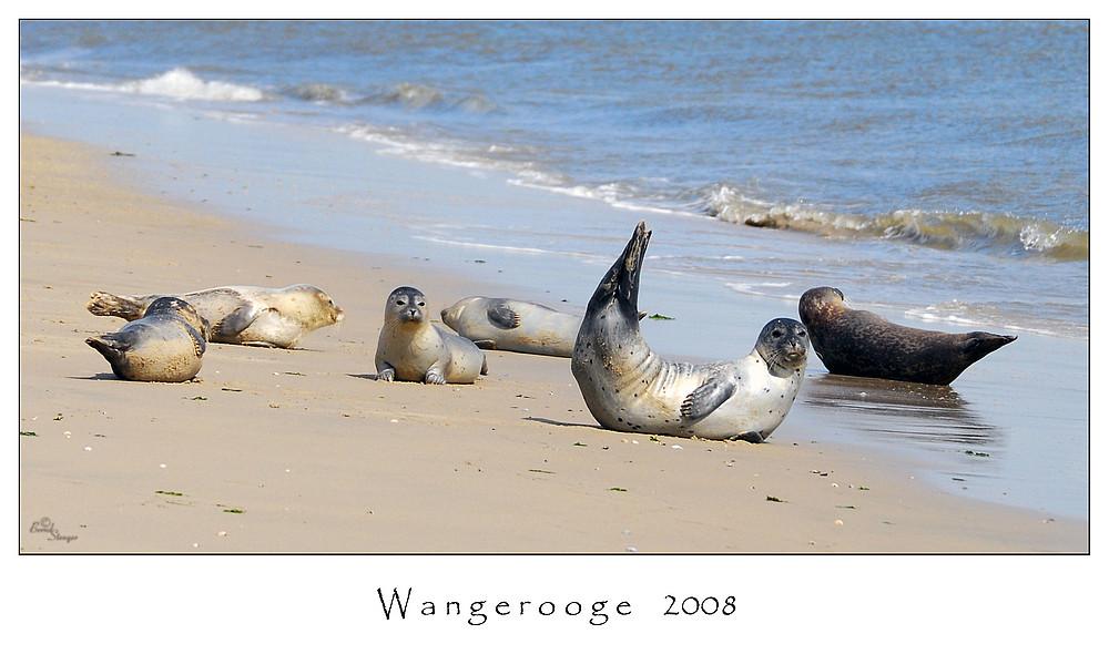 Ausgezeichnet Seehundbänke Cuxhaven Ideen - Wohnzimmer Dekoration ...