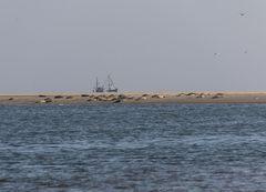 Seehundbank Hohes Riff