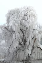 Seelenbaum
