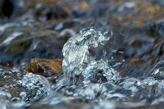 Seelenbilder 5: Aufruhr der Welle... - Les vagues se rebiffent...