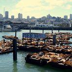 Seelöwen an der Pier 39