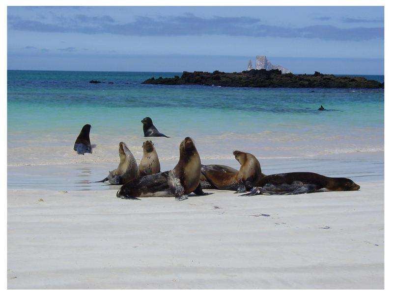 Seelöwen bei der Ankunft