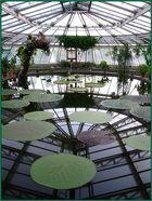 Seerosen im Botanischen Garten Berlin