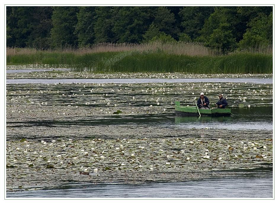 Seerosen, zwei Angler und jede Menge grün