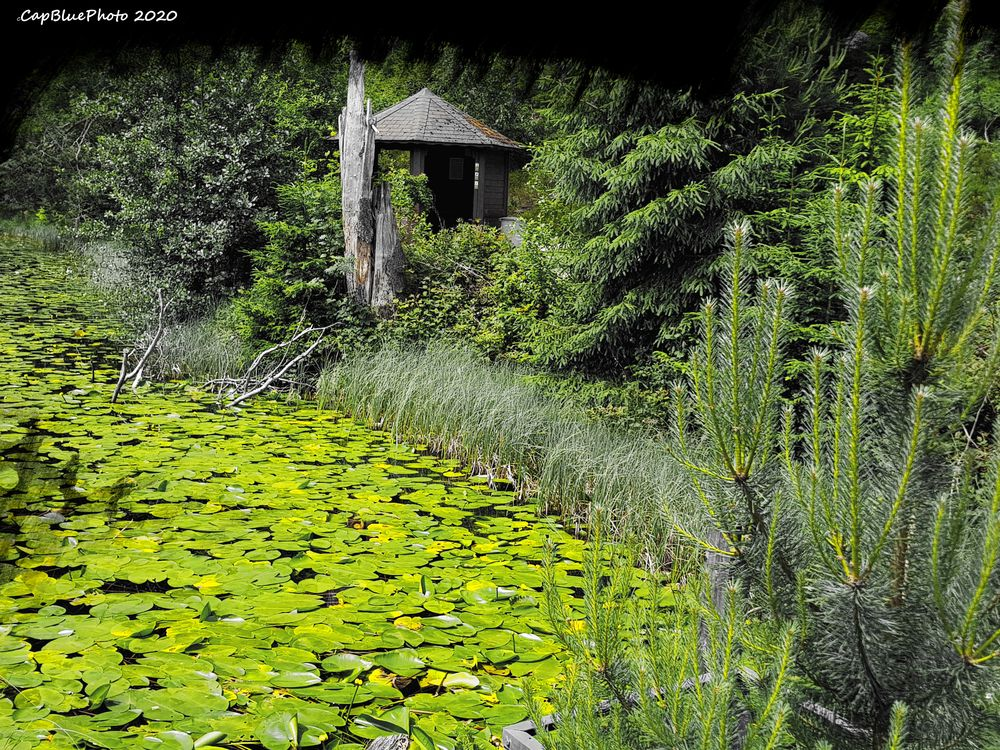 Seerosenteich am Huzenbacher See