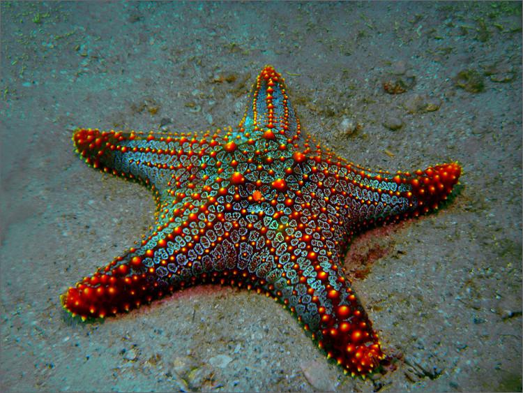 Seestern - reload - Foto & Bild | unterwasser, natur ...