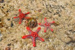 Seesterne auf einer Sandbank