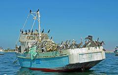 Seevögel bilden die Schiffsbesatzung