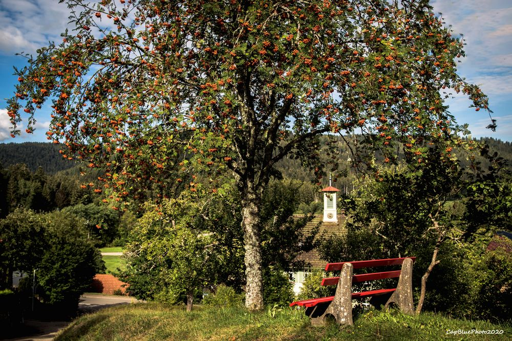 Seewald-Erzgrube Wanderweg Nagoldtalsperre