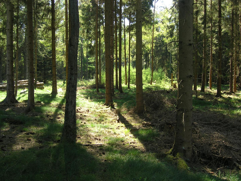 Segeberger Forst - Schleswig Holstein - Deutschland