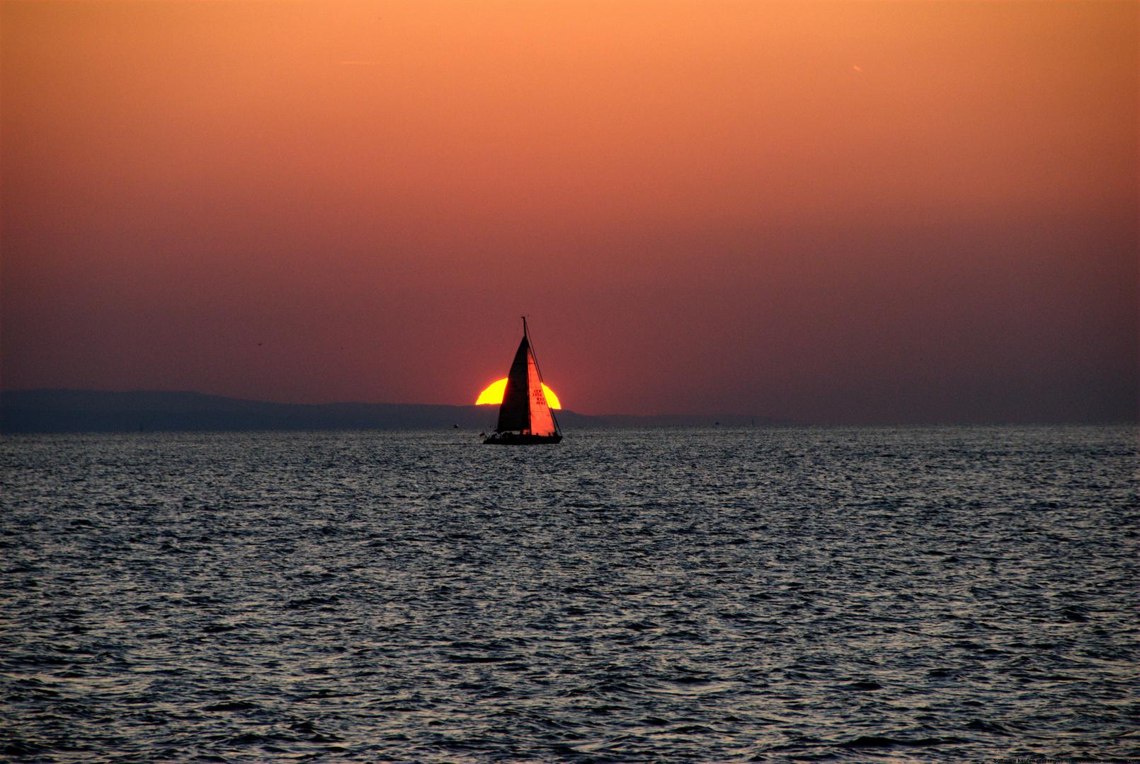 Segel in der Sonne