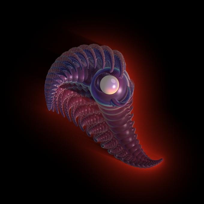 Segolenus gasteropodus