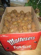 sehen die nicht auch so aus , wie das was in der Schachtel war?