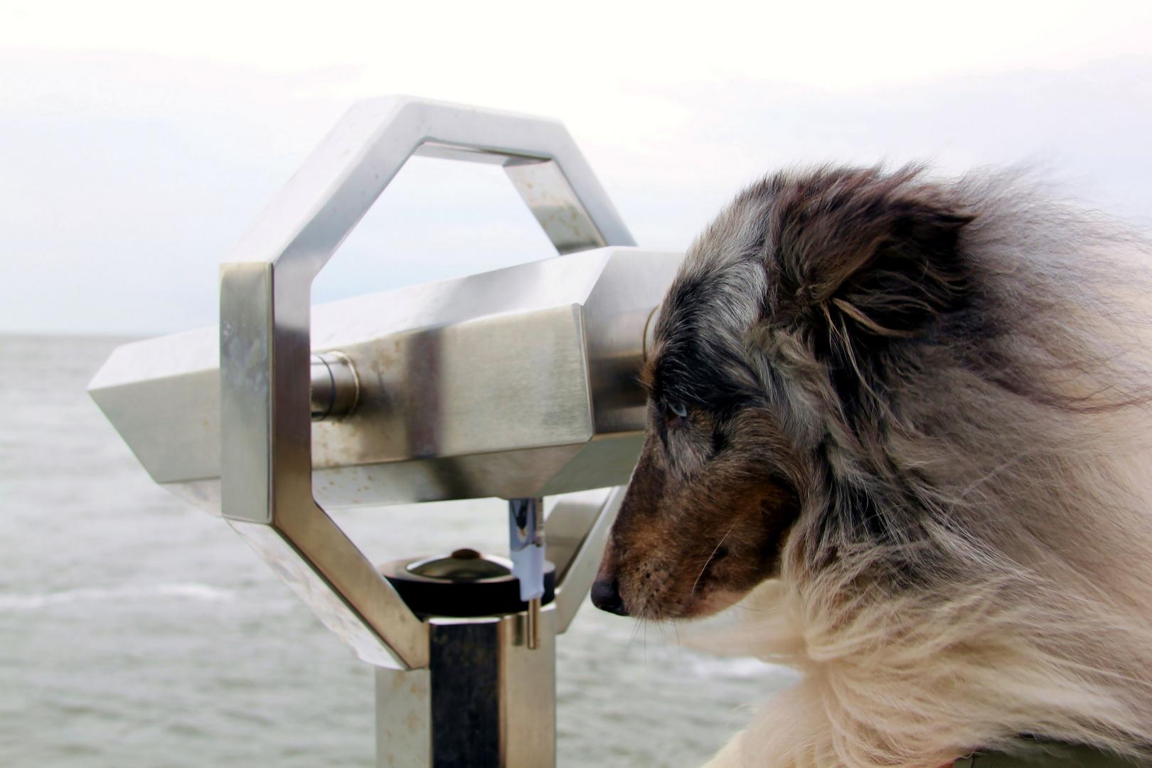Se(h)hund