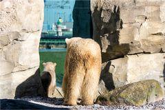 Sehnsucht nach der Arktis...