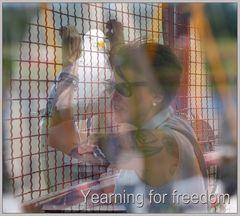 Sehnsucht nach Freiheit