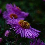 Sehnsucht nach wieder blühenden Pflanzen!