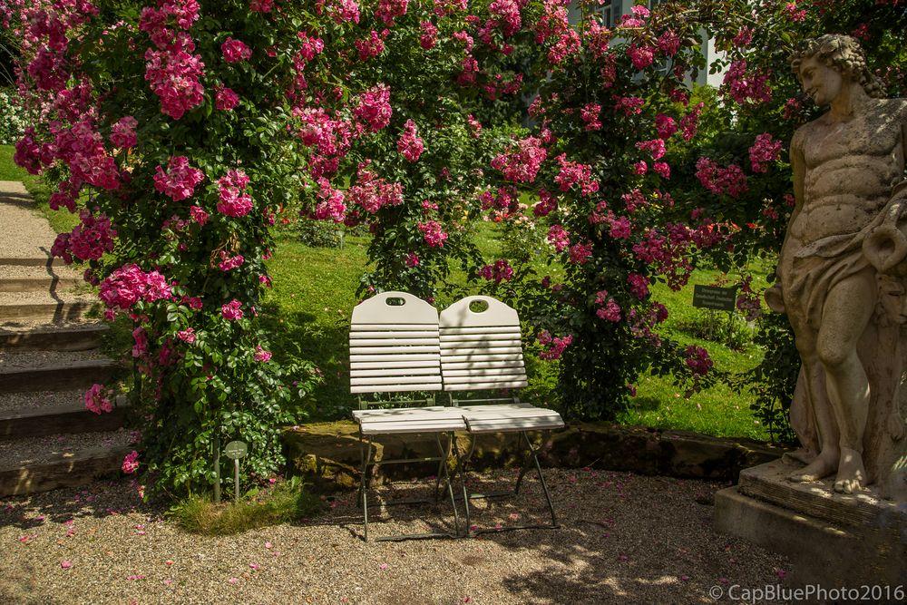 Sehnsüchtiger Blick im Rosengarten Beutig