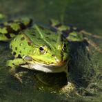 Sei kein Frosch!