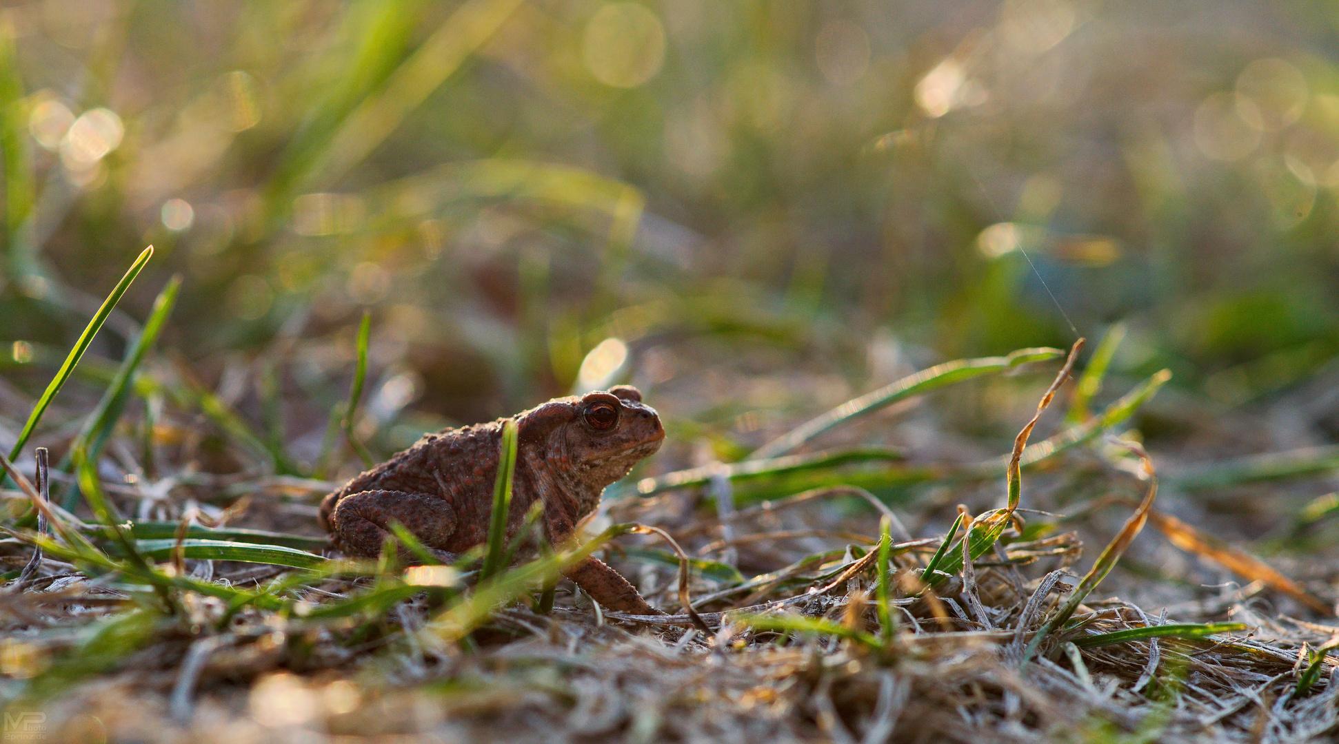Sei kein Frosch ...