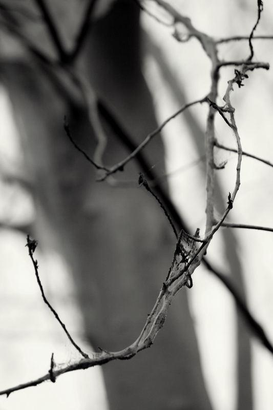 Seiden spinnen -4-