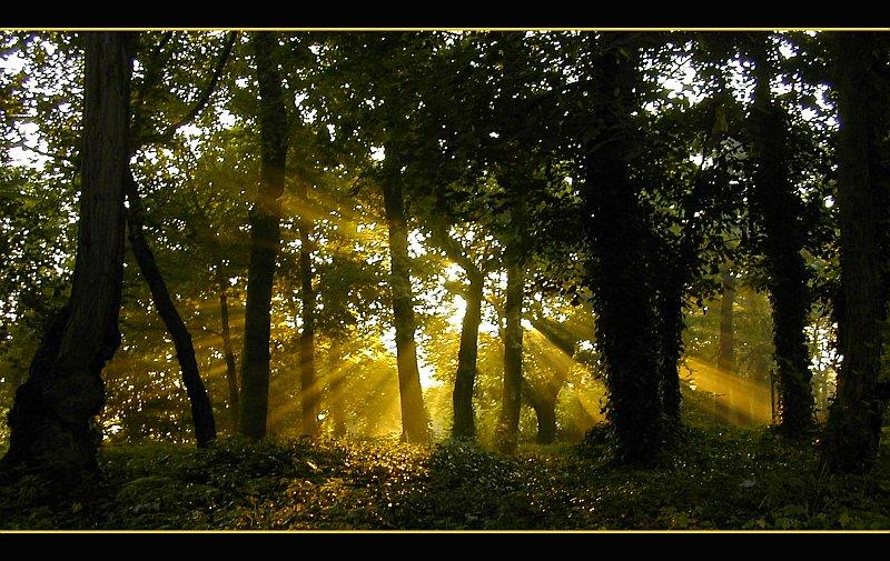 Seidene Sonnenstrahlen
