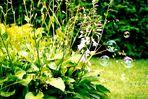 Seifenblasen erobern den Garten