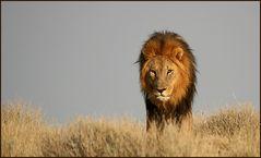 Seine Majestät (2)