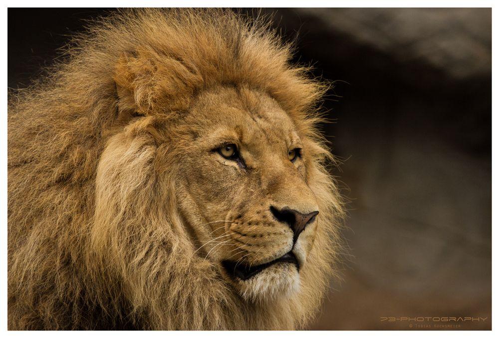 Seine Majestät...