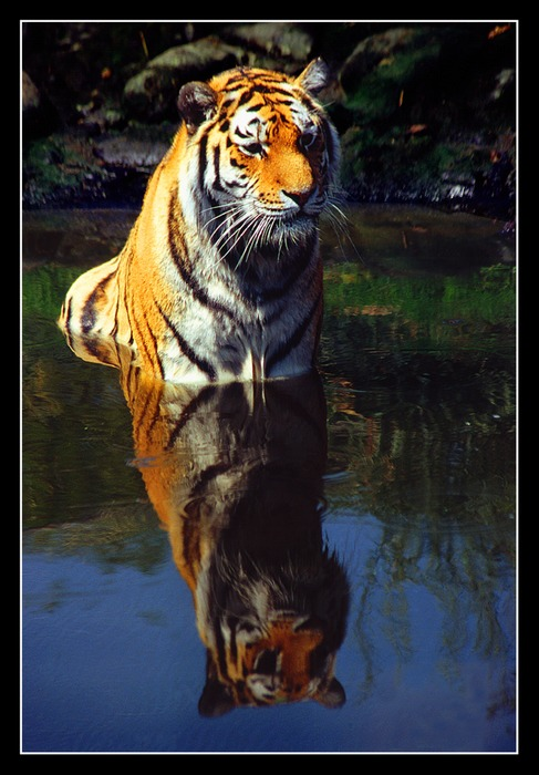 Seine Majestät badet