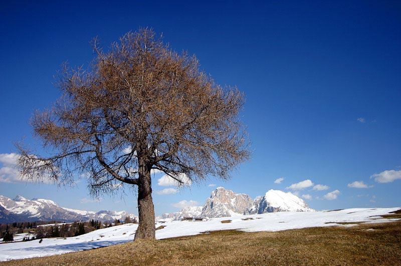 Seiser Alm - Südtirol