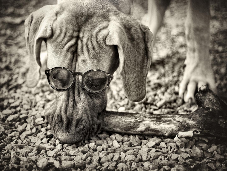 Seitdem er eine Brille trägt, meint er, er habe den Durchblick ...