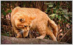 Selbst die sensibelste Katze kümmert sich nicht um das Gefühl der Mäuse.