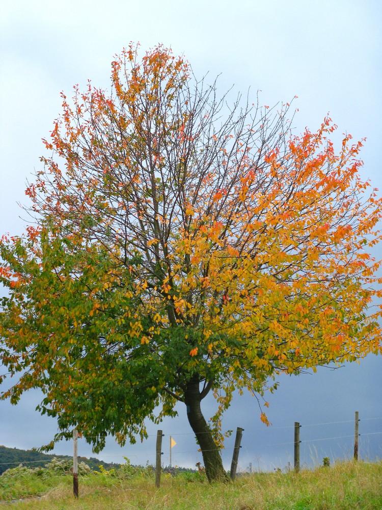 Selbst ein Baum hat seine zwei Seiten
