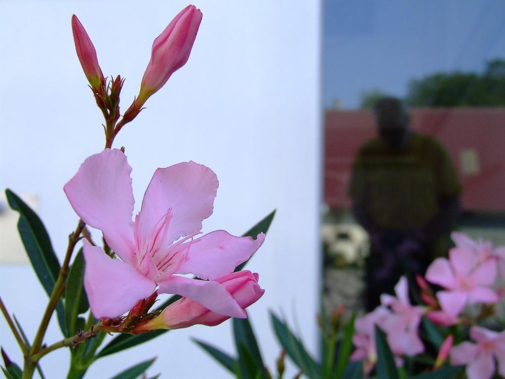selbst mit oleander