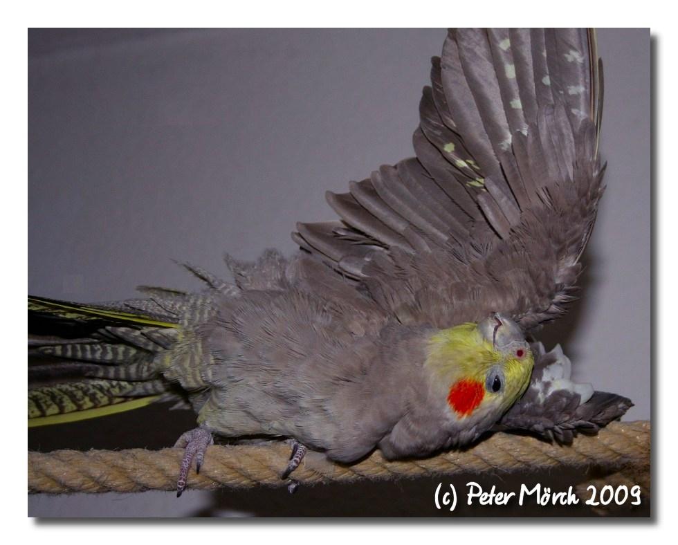 Selbstbefriedigung Foto & Bild   tiere, haustiere, vögel