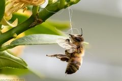 Selbstmord zum Tag der Biene