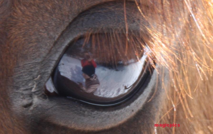selbstporträt.......im auge des pferdes...:-)