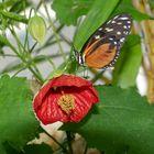 seltene Schmetterlinge 10