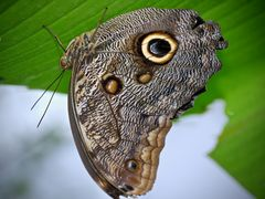 seltene Schmetterlinge 51