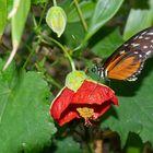 seltene Schmetterlinge 92