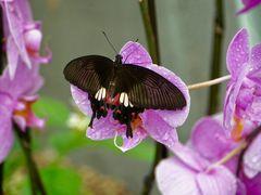 seltene Schmetterlinge