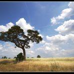 Seltener Baum und Wunderschöne Wolken