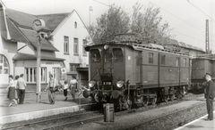Seltener Gast in Blankenburg/Harz
