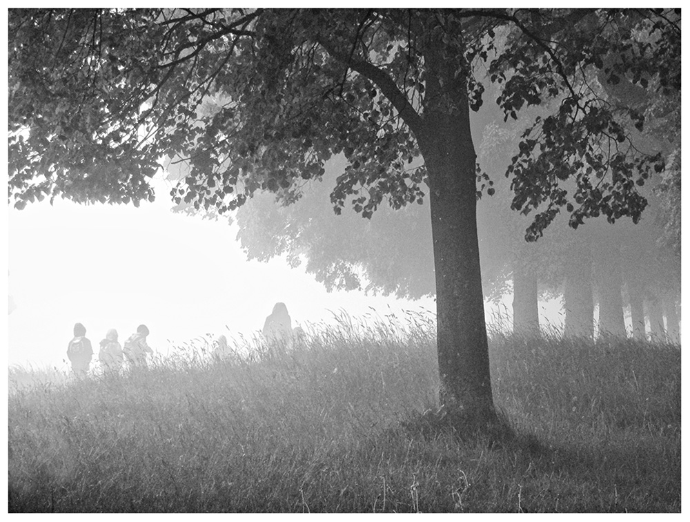 Seltsam, im Nebel zu wandern! (1)