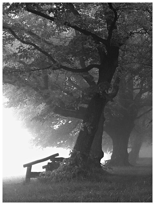 Seltsam, im Nebel zu wandern! (2)