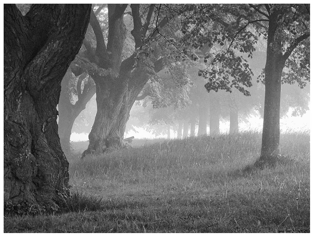 Seltsam, im Nebel zu wandern! (3)