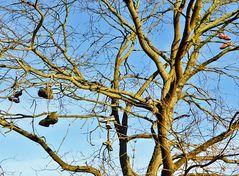 Seltsame Früchte am Baum