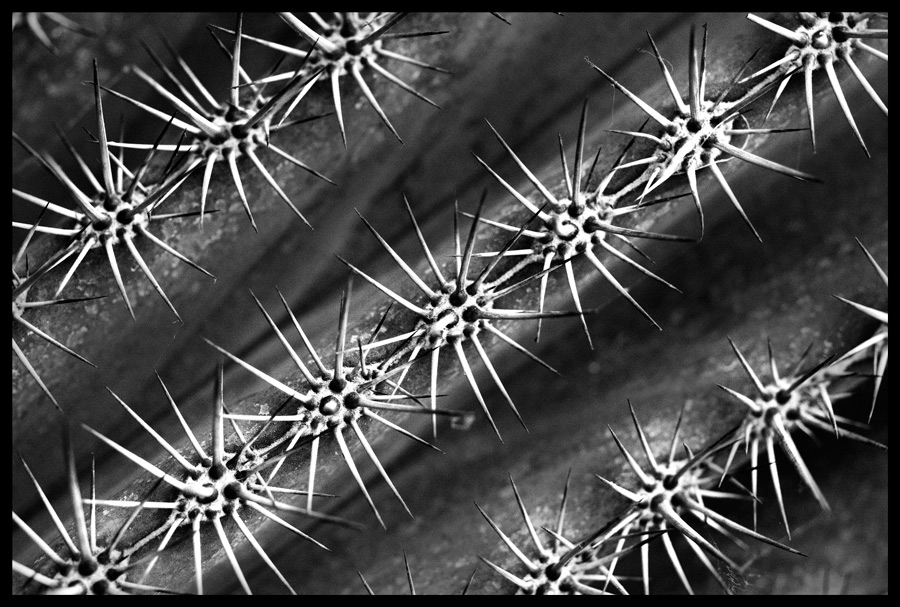seltsame Pflanzen #2